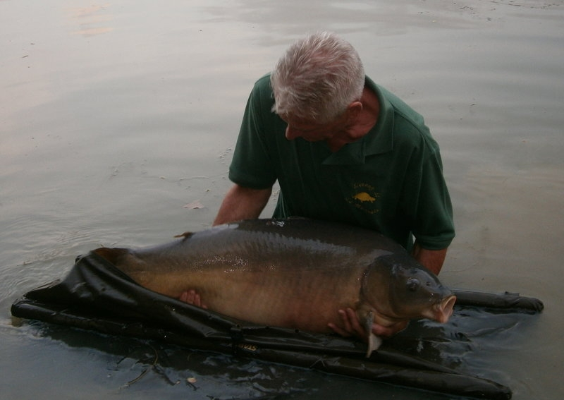 42lbs 4oz, stalking up the shallows, floatfished brown bread